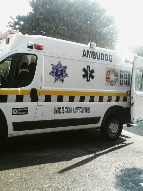 Ambudog, la primera ambulancia gratuita que salva la vida de animales callejeros y necesitados