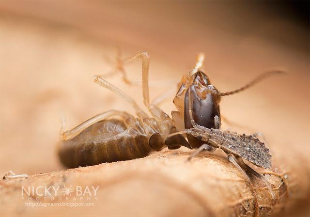 Bug caught a huge termite - DSC_1905