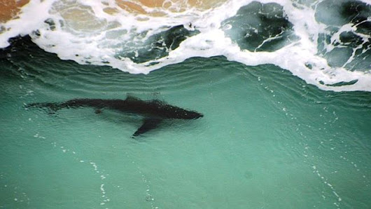 Sharks sightings clear southwest WA beaches over Easter long weekend