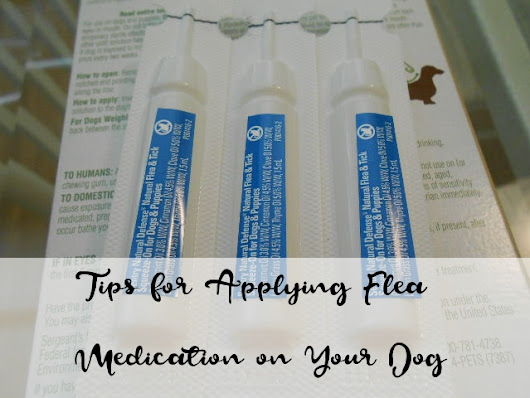 Tips for Applying Topical Flea Medication on Your Dog