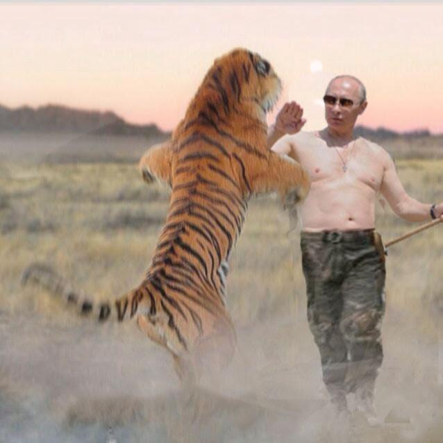 vladimir-putin-fights-tiger-saves-family-at-kruger-park2
