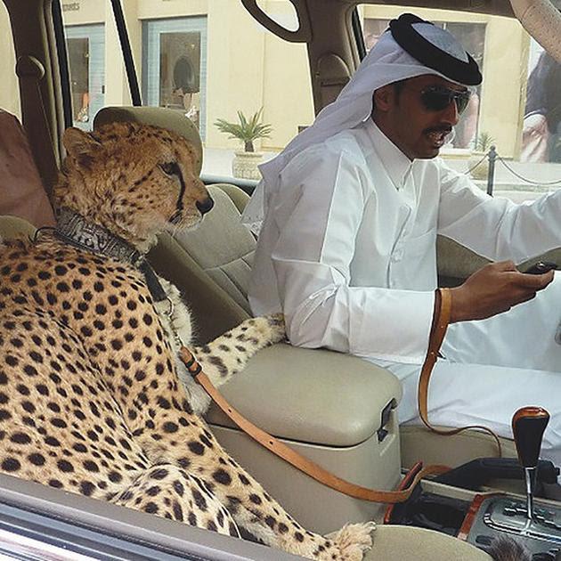 2yIp2Oj 35 Things You See Every Day In Dubai