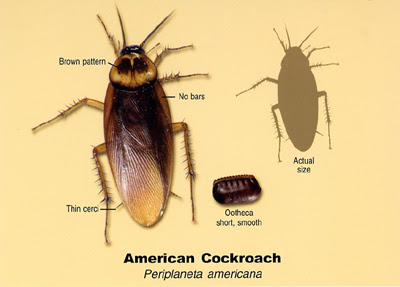 Roach Problem? Here is what you need to know
