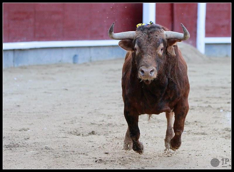 Toro de Torrestrella