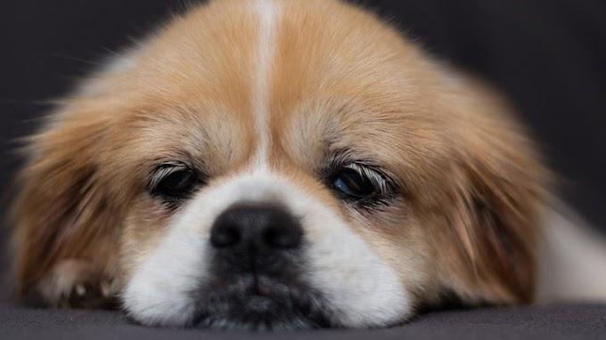 Consejos para acabar con el aburrimiento en el perro