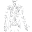 Why Massage? The Skeletal System