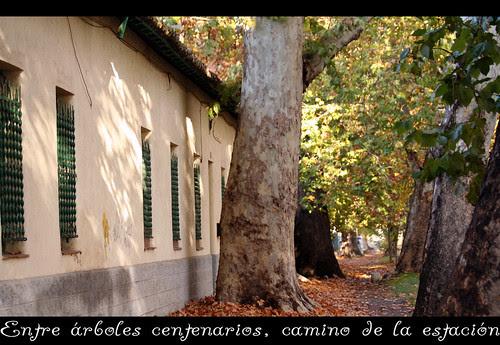 Aranjuez, camino de la estación