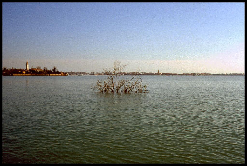 Albero sottomarino / Subarine tree