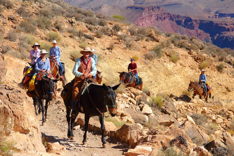 IMG_7867 Mule Team, South Kaibab Trail, Grand Canyon National Park