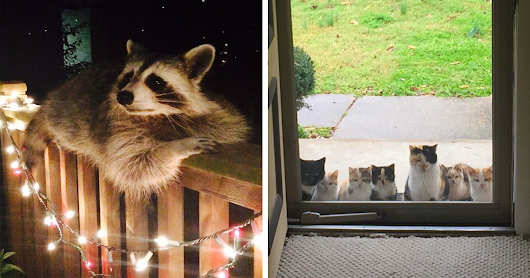 10+ Animals Who Came To Say 'Hi', And Melted Everyone's Hearts