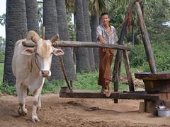 Molino para aceite de coco
