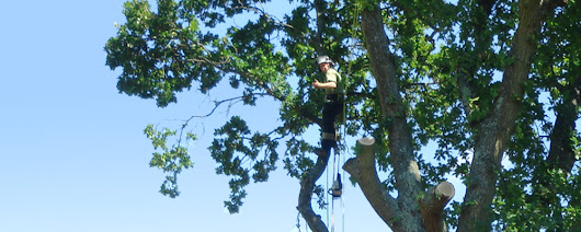 Acorn Tree Specialist Southampton Tree Surgeons Services