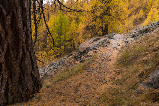larch path