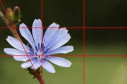 4 la regola dei terzi fiori