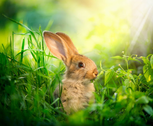 DEA Fears Bunnies May Get High as Balls off Medical Marijuana in Utah