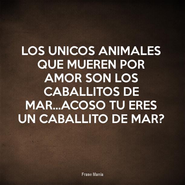 Cartel Para Los Unicos Animales Que Mueren Por Amor Son Los
