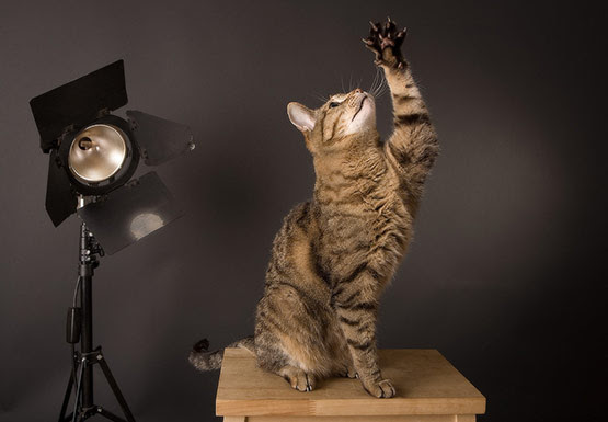07 Training Cat Photography in 20 Examples of Perfectly Timed Animal Photography