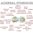 Adrenal Glands and Stress - Thrive for Life Chiropractic