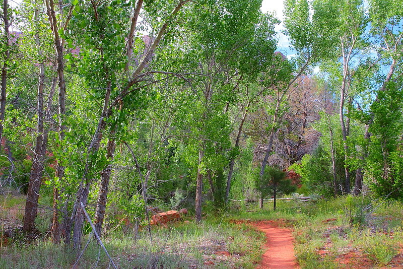 IMG_5744 Kolob Arch/La Verkin Trail, Zion National Park