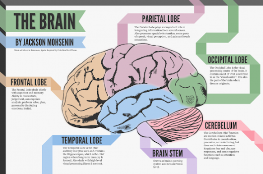 5 Interesting Infographics about Your Brain and Your Mind - Ipnostudio