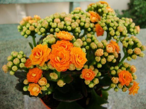Nomes de plantas para interior