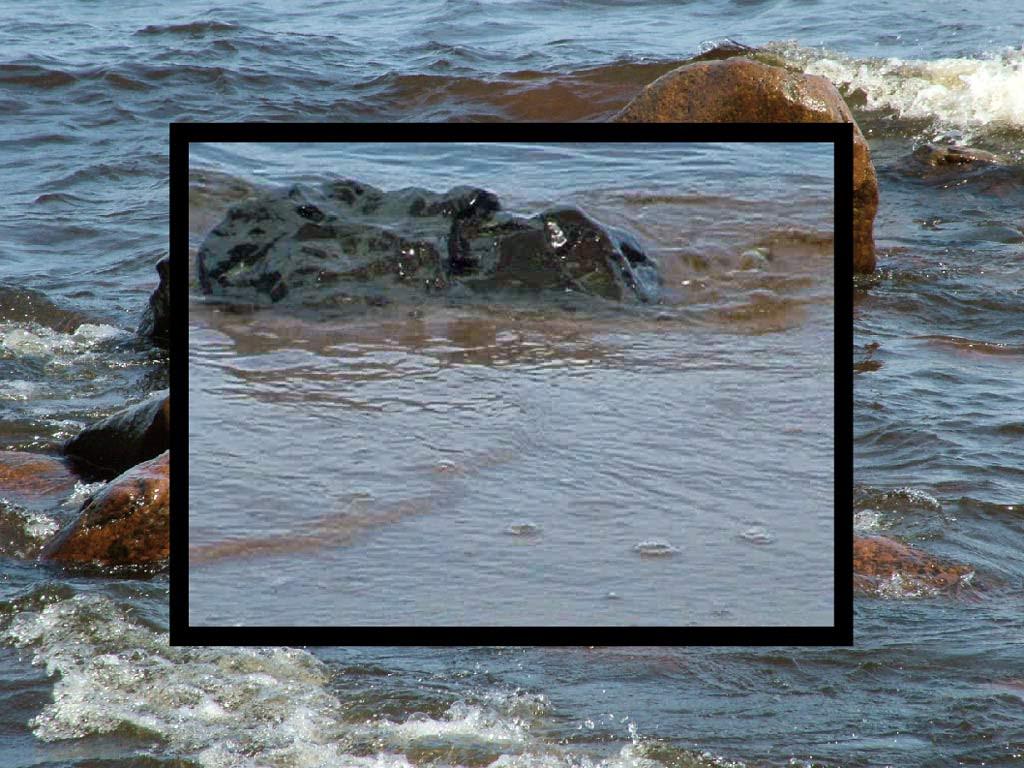 Ldofpdoiufds koi pond live screensaver for Koi pond screensaver