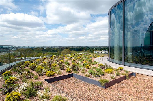 Green roof and living wall market boom - special report