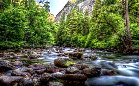 beautiful mountainous river riverbed  rocks pine forest  green trees park yosemite