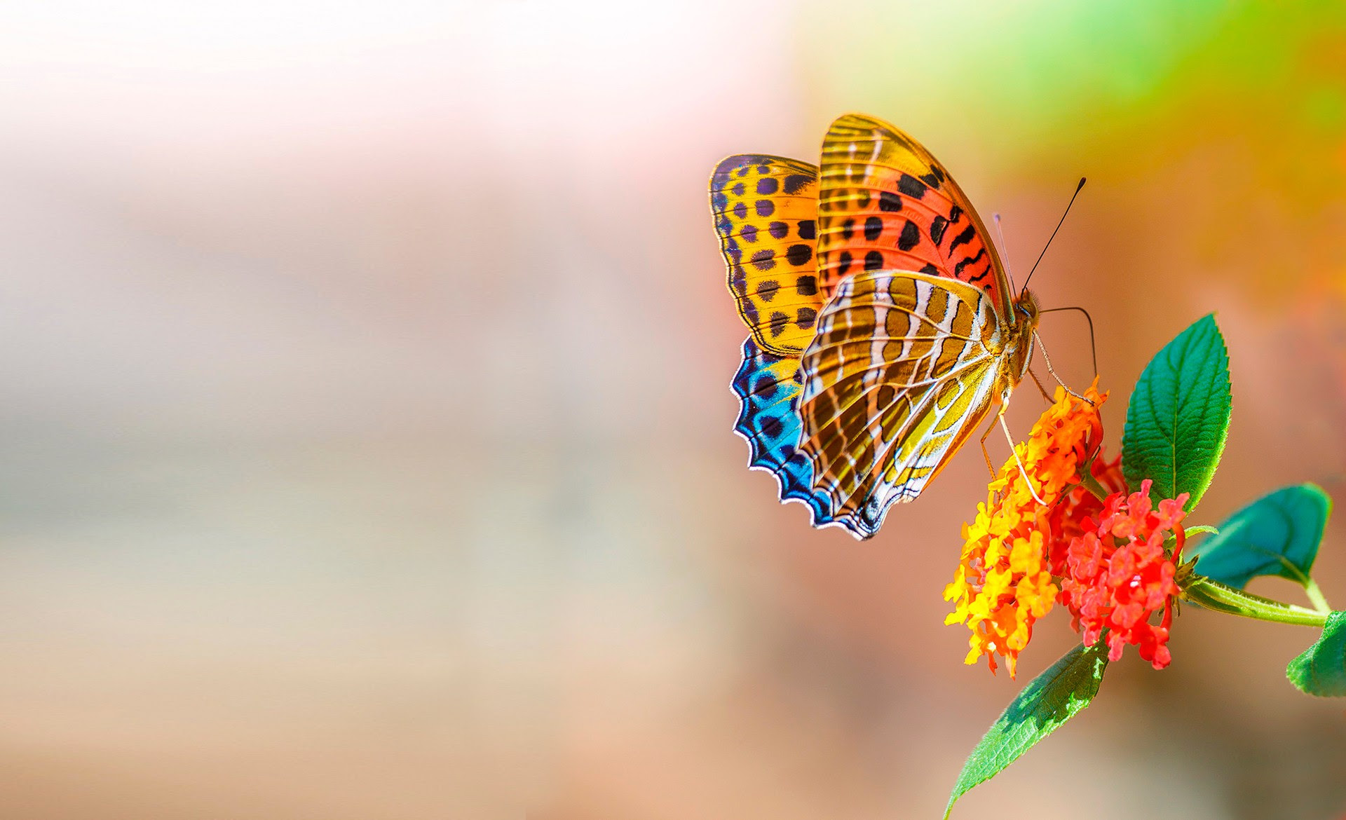 Butterfly and flower wallpaper   nature and landscape ...