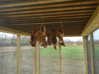Meat Dryer with Brined/Spiced Meat Hanging