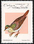 Key West Quail-Dove Geotrygon chrysia