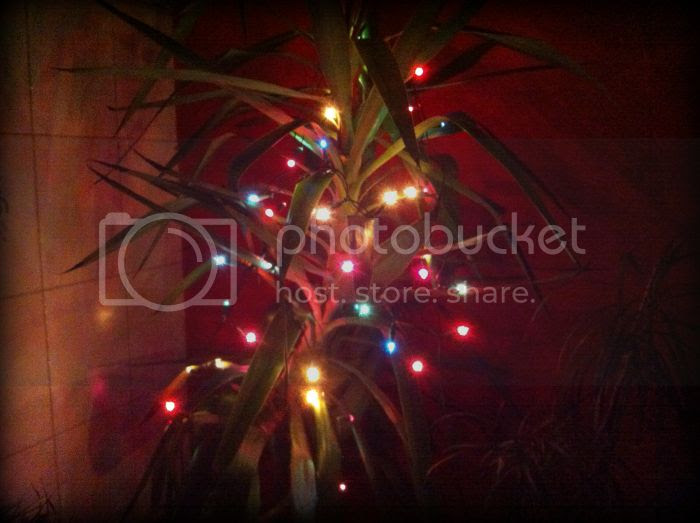 Wwihnachtspalme