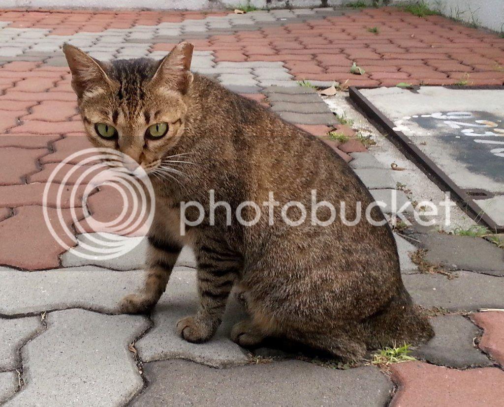 photo CatSimsP07.jpg
