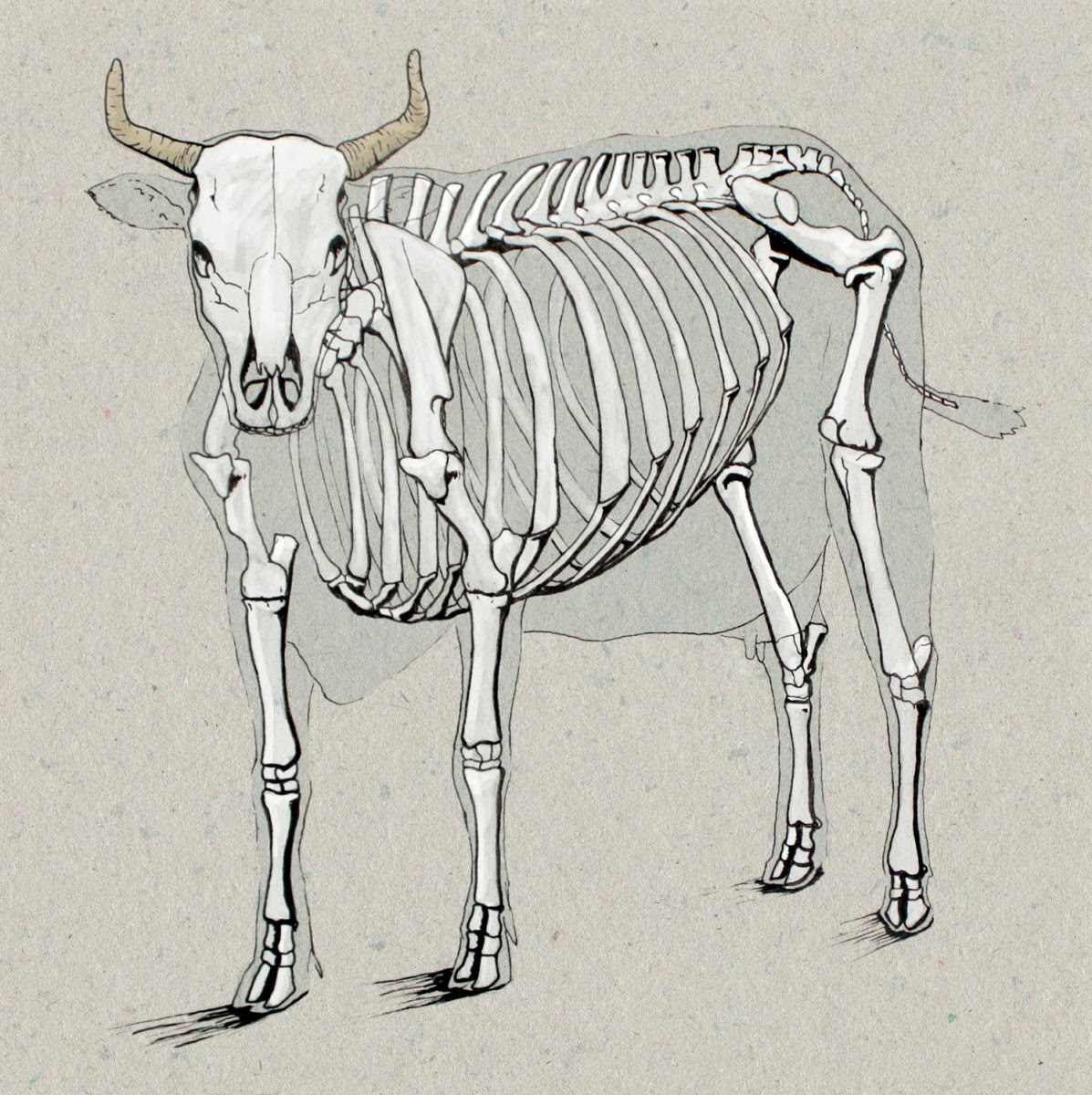 Cow Diagram