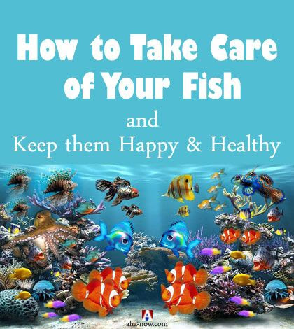 How to Take Care of Your Fish and Keep them Happy & Healthy | Aha!NOW