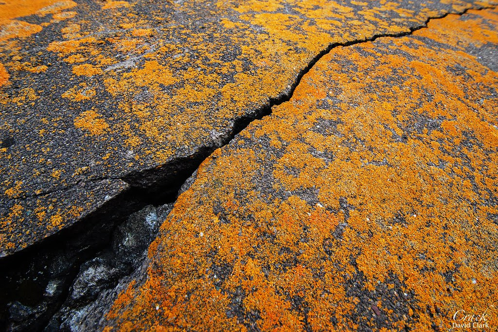 A black crack running through orange-lichened cement.