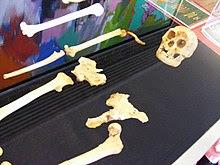 Esqueleto expuesto del ejemplar LB1