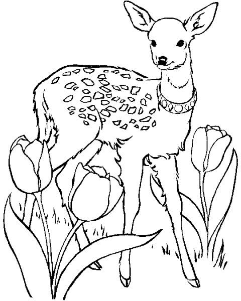 Disegni Animali Del Bosco Da Colorare E Stampare Coloradisegni