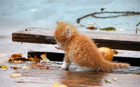 kleine orange kitten im regen hintergrundbilder kleine