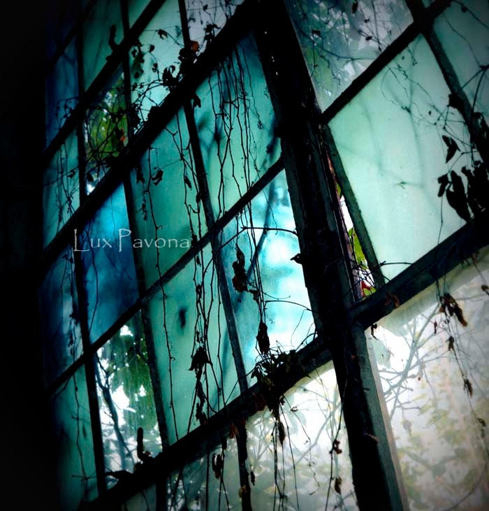 I Dream in Azure - Fine Art Film Photography - Stained Glass, Cool colors, Blue, Green, Vines, Dreamy, Old Mill - LuxPavona