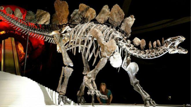 Estegossauro (PA)