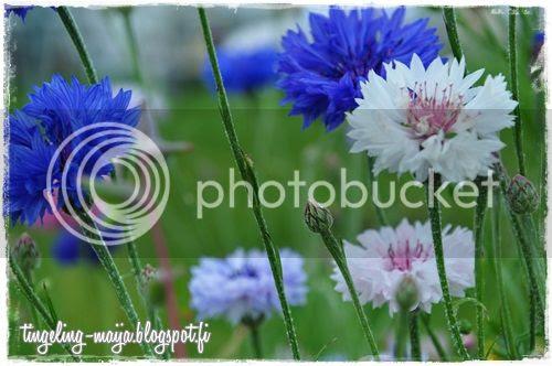 photo DSC_1021crop.jpg