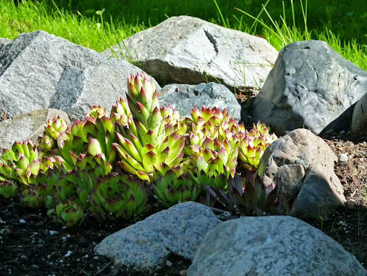 4 Things To Know Before Creating A Rock Garden