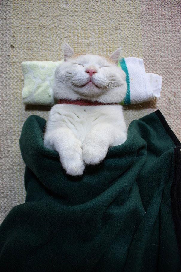 Shironeko, The Happiest And Sleepiest Cat Ever