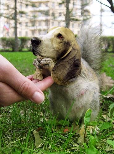 Beware of the Bassetsquirrel