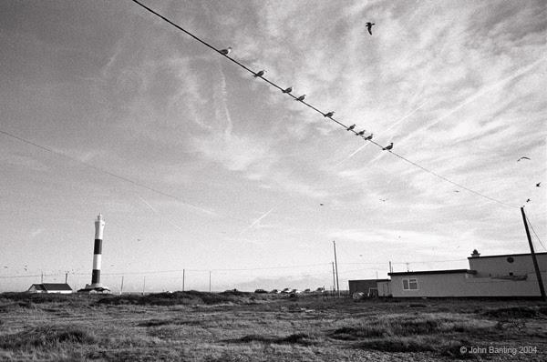 Dungnessbirds