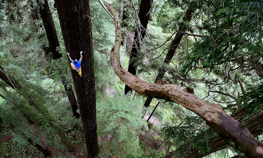 World view: free climbing a giant redwood, Eureka, northern California, US | Travel | The Guardian