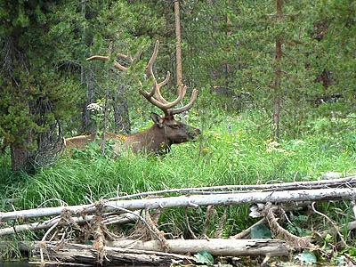 grand elk.jpg