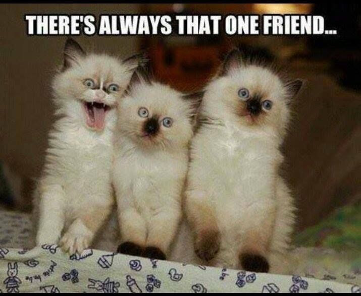 That One Friend Always There Quotes
