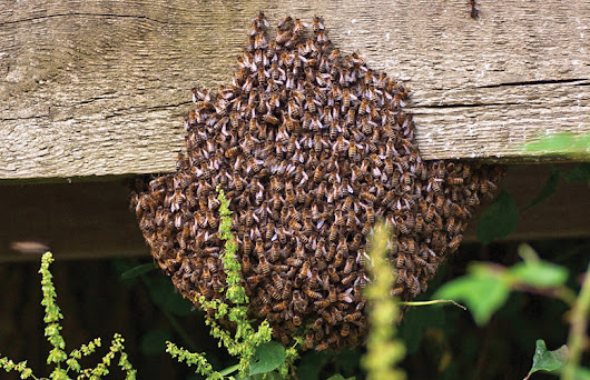 Choose the Best Treatments of Bees from Bee Removal Perth Officers